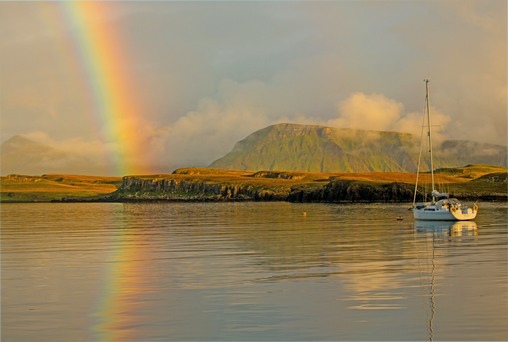 Canna after the rain